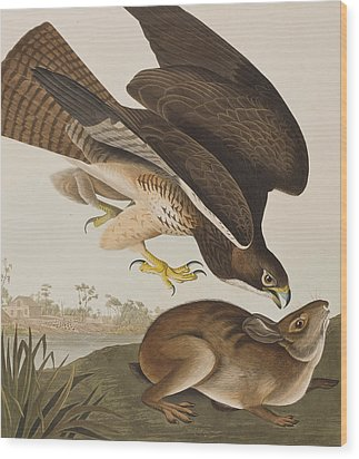 The Common Buzzard Wood Print by John James Audubon