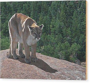 The Cougar 1 Wood Print by Ernie Echols