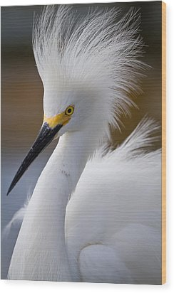 The Crest Of A Snowy Egret Wood Print