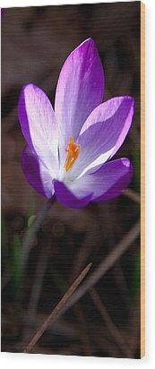 The Crocus Wood Print by David Patterson