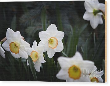 The Daffodil Bloom Wood Print by Thanh Tran