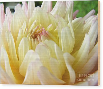 Wood Print featuring the photograph Yellow Dahlia by Margie Amberge