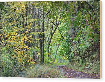 The Dense Forest Wood Print by Guido Montanes Castillo
