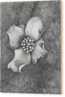 The Dogwood Wood Print