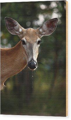 The Drip Wood Print by Rita Kay Adams