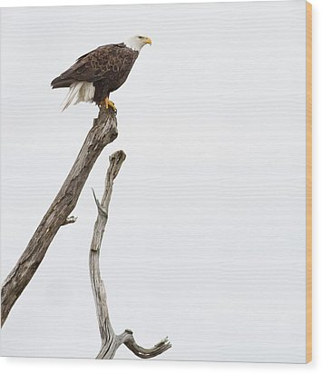 Wood Print featuring the photograph The Eagle Has Landed by Annette Hugen