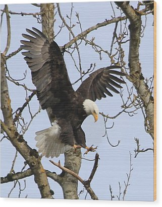 The Eagle Is Landing Wood Print by Angie Vogel
