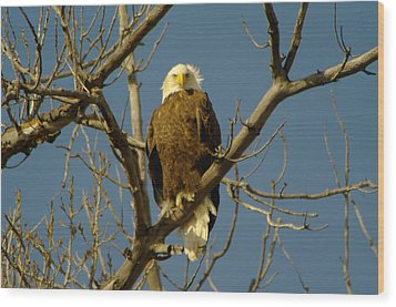 The Eagle Looks Down Wood Print by Jeff Swan