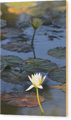 The Echo Of A Lotus Flower Wood Print