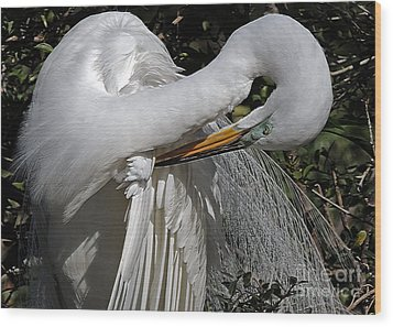 The Elegant Egret Wood Print