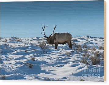 The Elk Wood Print