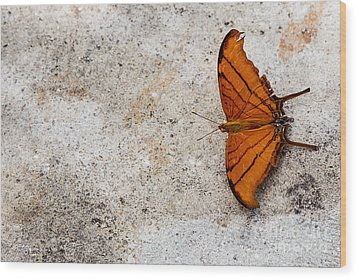 The Elusive Butterfly  Wood Print by Rene Triay Photography