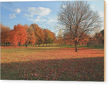 Wood Print featuring the photograph The End Of Autumn In Francis Park by Scott Rackers