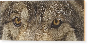 Wood Print featuring the photograph The Eyes Of The Wolf  by Brian Cross