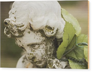Wood Print featuring the photograph The Face Of An Angel by Amber Kresge