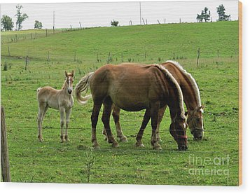 The Family Of Three. Wood Print by Penny Neimiller