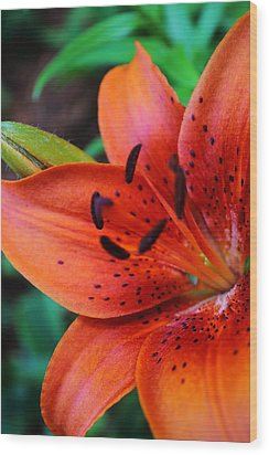 The First Lily Wood Print