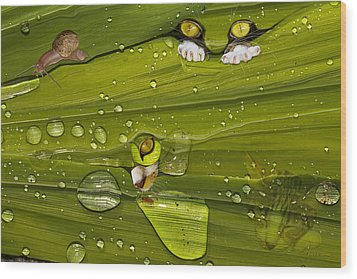 The First Rain Wood Print by Angela A Stanton