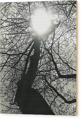 The First Shot Wood Print by Jesse Ciazza