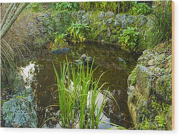 Wood Print featuring the photograph The Fish Pond  by Naomi Burgess