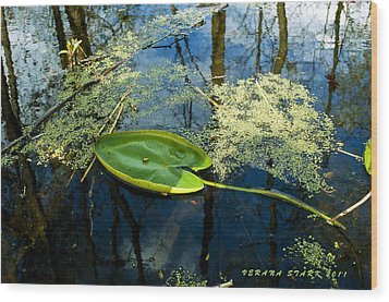 Wood Print featuring the photograph The Floating Leaf Of A Water Lily by Verana Stark