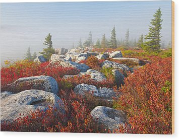 The Fog Clears At Dolly Sods Wood Print by Bill Swindaman