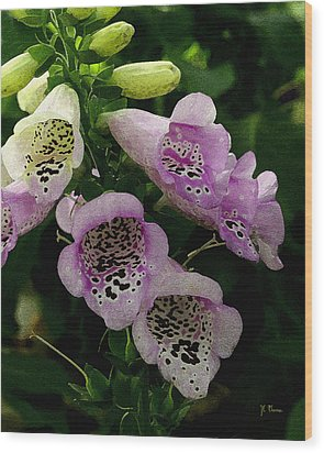 Wood Print featuring the photograph The Foxglove by James C Thomas