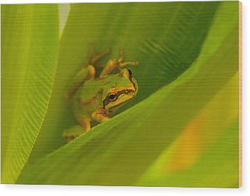 The Frog Wood Print by Dennis Bucklin
