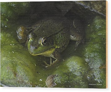 The Frog Wood Print by Verana Stark