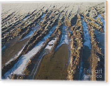 The Frozen Earth Wood Print by Liz  Alderdice