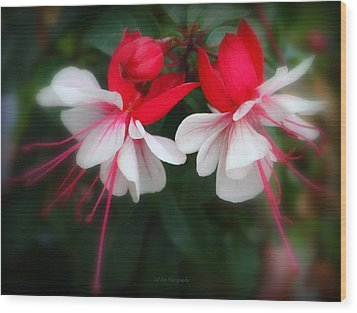 The Fuchsia Wood Print by Jeanette C Landstrom