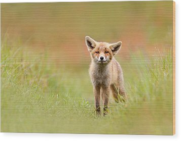 The Funny Fox Kit Wood Print by Roeselien Raimond
