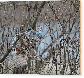 Wood Print featuring the photograph The Gathering Blue Jay by Marjorie Imbeau