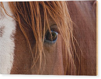 Wood Print featuring the photograph The Gentle Eye  by Eric Rundle
