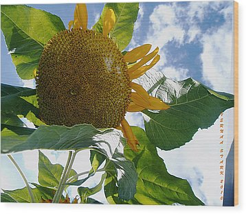 Wood Print featuring the photograph The Gigantic Sunflower by Verana Stark