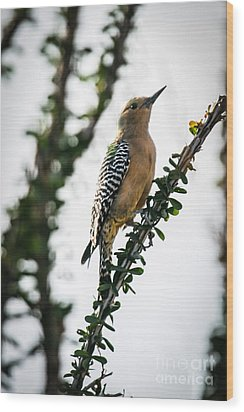 The Gila  Woodpecker Wood Print by Robert Bales
