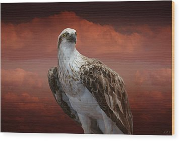 Wood Print featuring the photograph The Glory Of An Eagle by Holly Kempe