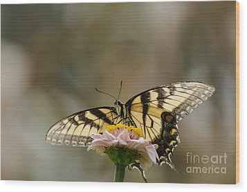 The Glow Through Nature Stain Glass Wood Print by Donna Brown