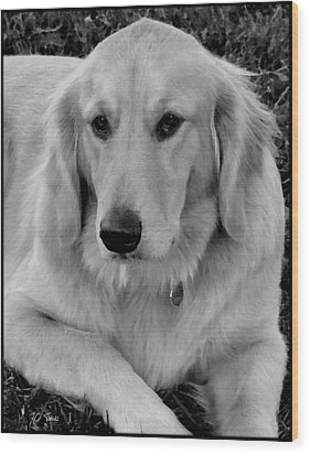 The Golden Retriever Wood Print by James C Thomas