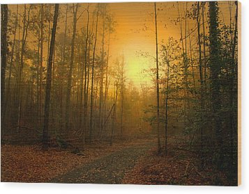 The Golden Touch Of Autumn Wood Print by Nina Fosdick