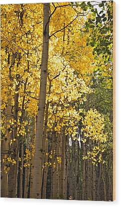 Wood Print featuring the photograph The Golden Tree by Eric Rundle