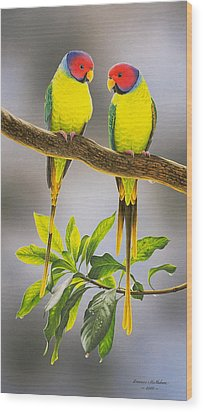 The Gorgeous Guys - Plum-headed Parakeets Wood Print by Frances McMahon