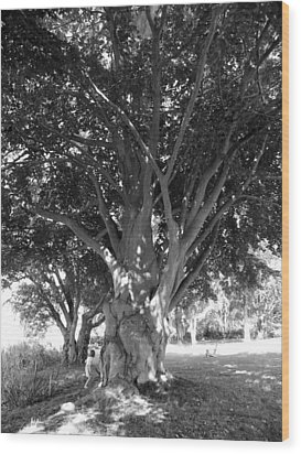 The Grandmother Tree Wood Print by Sarah Lamoureux