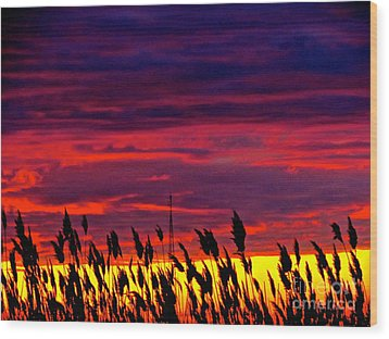 The Grasses Reach  Wood Print by Q's House of Art ArtandFinePhotography