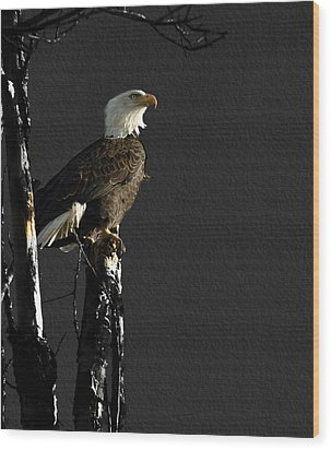 The Great Bald Eagle 1  Wood Print by Thomas Young