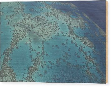 The Great Barrier Reef  Wood Print