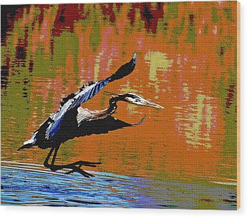 The Great Blue Heron Jumps To Flight Wood Print by Tom Janca