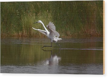 Wood Print featuring the photograph The Great Egret by Leticia Latocki