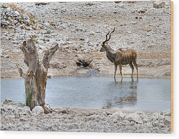 Wood Print featuring the photograph The Great Kudu  by Juergen Klust