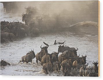 Wood Print featuring the photograph The Great Migration  by Chris Scroggins